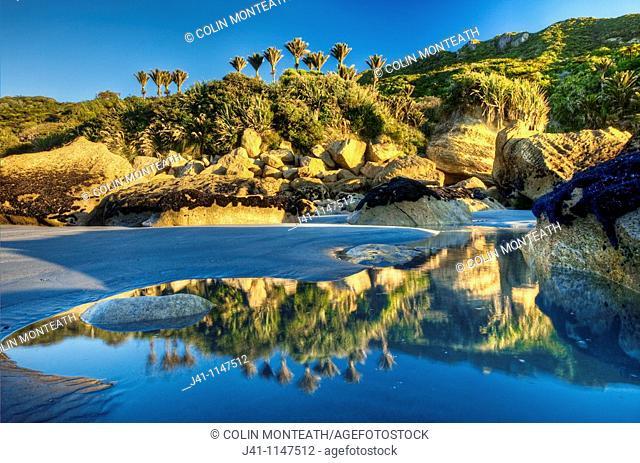 Nikau palms reflection, on beach at Woodpecker Bay, Punakaiki, Paparoa National Park, West Coast, New Zealand