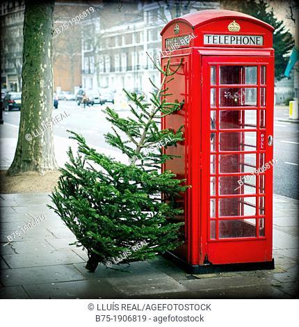 Arbol de navidad apoyado en una cabina telefonica enfrente del Victoria and Albert Museum de Londres, Christmas tree leaning against a phone box in front of the...