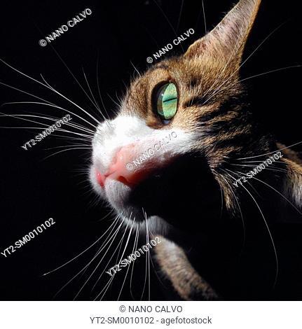 Close up portrait of beautiful cat