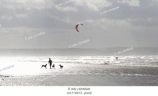 Person Walking Dogs On Beach With Kite Surfer In Background