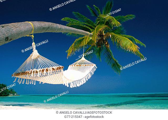 Beach of White Sands Resort. Island of Dhidhoo Finohlu, Ari Atoll, Maldive Islands. Indian Ocean