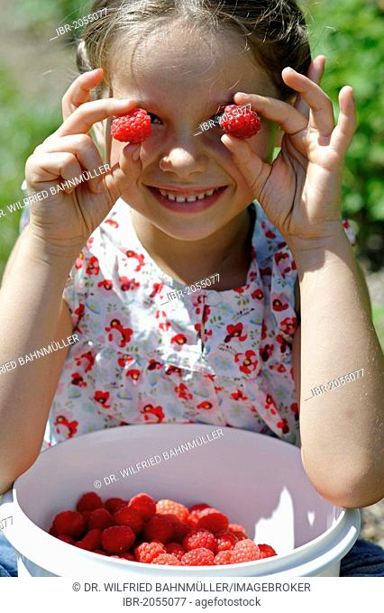 Girl holding raspberries in front of her eyes, with a bowl of freshly picked raspberries, Bavaria, Germany, Europe