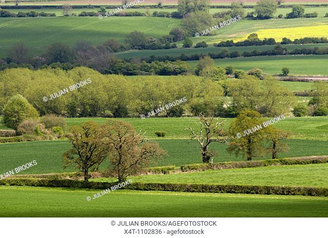 Fields in the cotswolds, Looking across the Cherwell valley in Spring