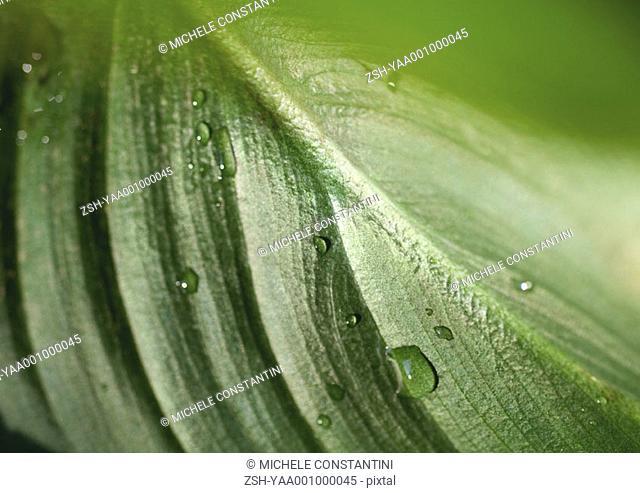 Leaf, extreme close-up