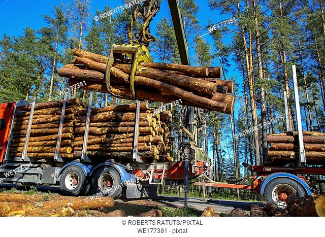 Crane in forest loading logs in the truck. Timber harvesting and transportation in forest. Transport of forest logging industry and forestry industry