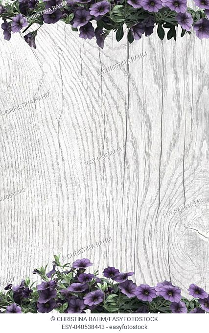 Purple petunias on wood surface with patina, organic texture background copy space
