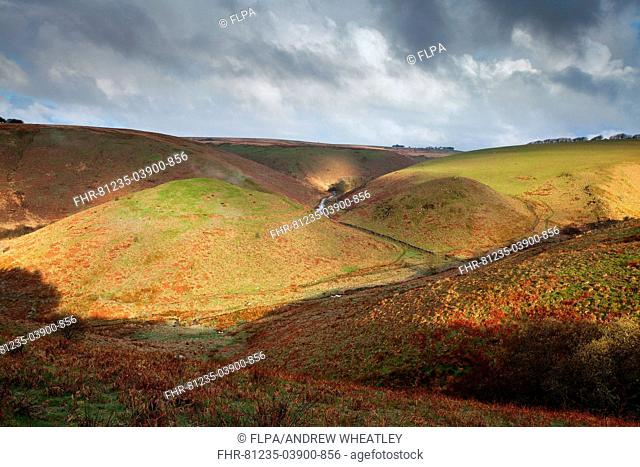 View of Iron Age hillfort on hilltop in valley at dawn, Cow Castle, Two Moors Way, River Barl, near Simonsbath, Exmoor N P , Somerset, England, April