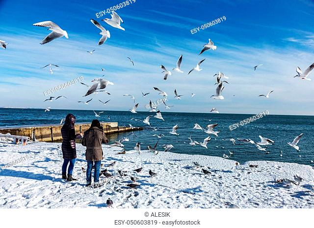 Odessa, Ukraine - January 19, 2016: Young girl feeds the hungry seagulls on the beach of the Black Sea winter. Hungry gulls circling over the people waiting for...