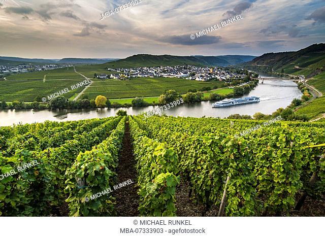 Cruiseship shipping through the Vineyards around the Moselle at Trittenheim, Moselle valley, Rhineland-Palatinate, Germany