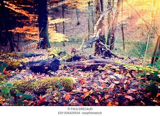Beautiful autumn forest in red, orange and green tones