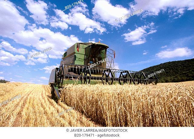 Wheat harvesting. Navarre. Spain