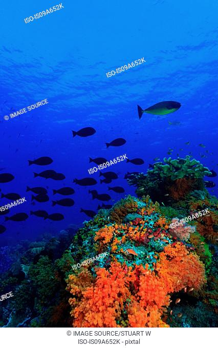School of fish swimming by coral reef