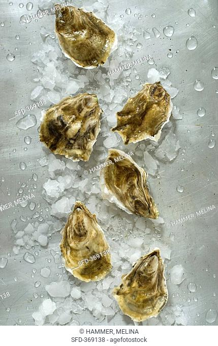 Fresh oysters with crushed ice overhead view