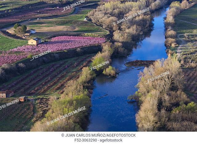 Flowering, Peach tree (Prunus persica), Willow tree (Salix sp. ), Fruiturisme, Tourism Experience, Aitona village, Segre river, Baix Segre, Lleida, Catalonia