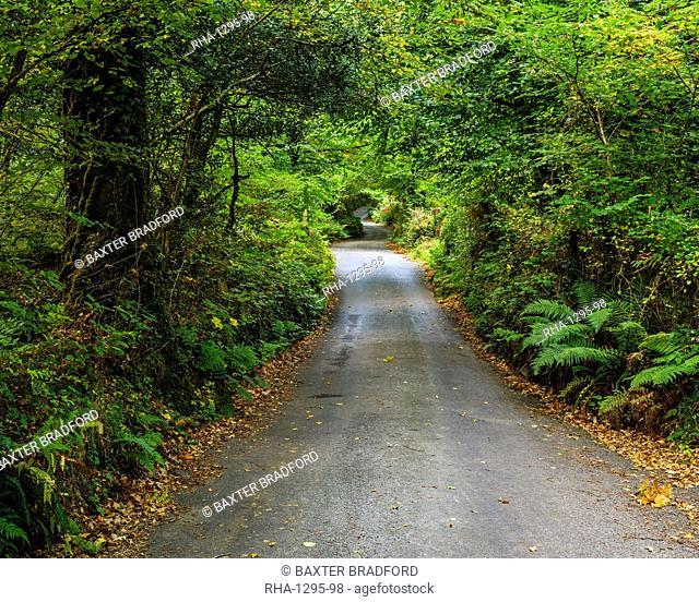 Autumn colours in the Devon lane leading to Beckaford Bridge, Dartmoor National Park, Bovey Tracey, Devon, England, United Kingdom, Europe