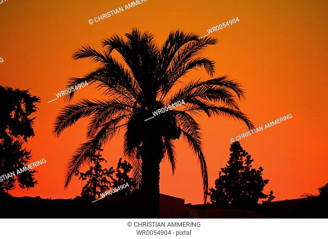 Palm with Red Sky