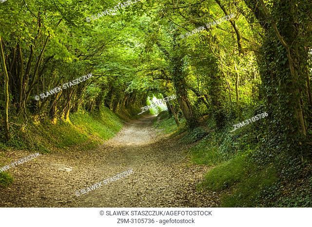 Tree tunnel near Halnaker village, West Sussex, England