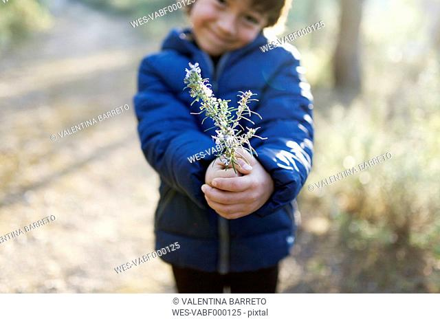 Little boy offering blossoming twig of rosemary