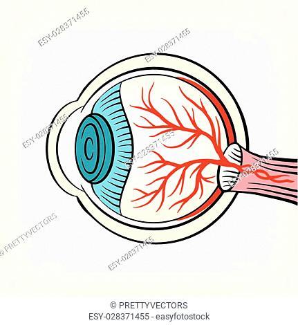 Eyeball x ray vector cartoon illustration