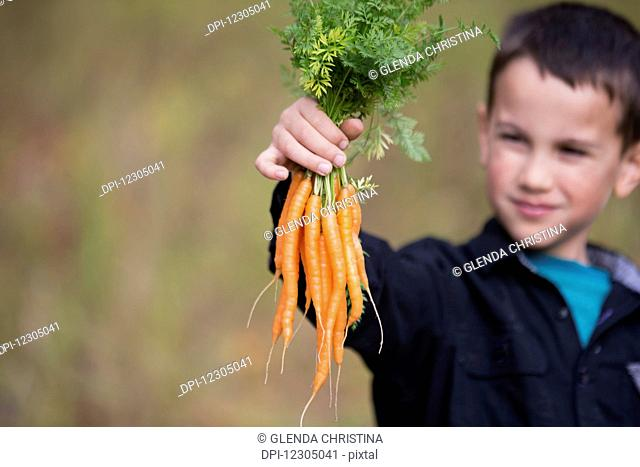 An Alaska native inipiat boy holding carrots from a garden in Palmer, Southcentral Alaska, autumn