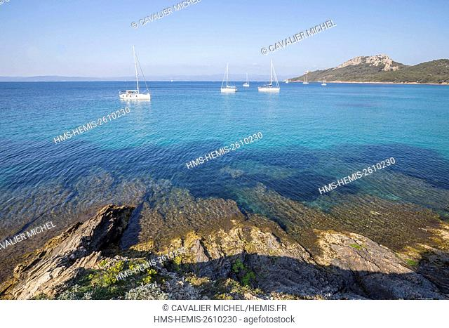 France, Var, Iles d'Hyeres, national park of Port-Cros, Island of Porquerolles, bay of Alycastre view of the Pointe du Pin