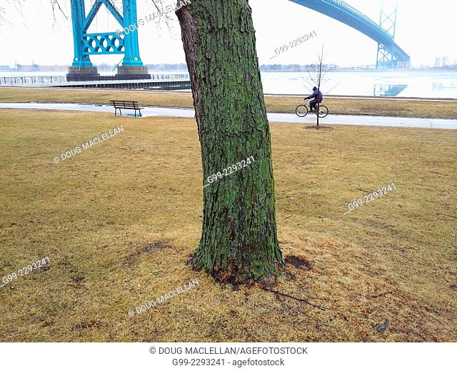 Ambassador Bridge, tree and cyclist along Detroit river, Windsor, Ontario, Canada