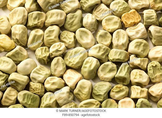 'Cascadia' snap pea seeds Pisum sativum 'Cascadia'