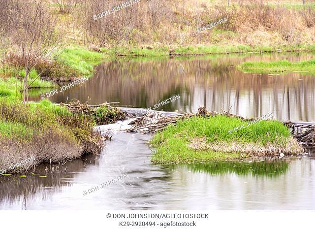 Spring foliage reflections in Fairbank Creek, Greater Sudbury, Ontario, Canada