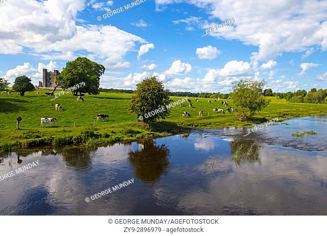 Cattle below Bective Abbey, a Cistercian abbey on the River Boyne founded in 1147, but the remaining ruins primarily date to the 15th century, County Meath