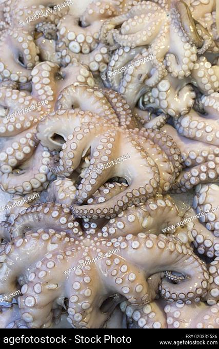 Fresh octopuses prepared to sell at the market