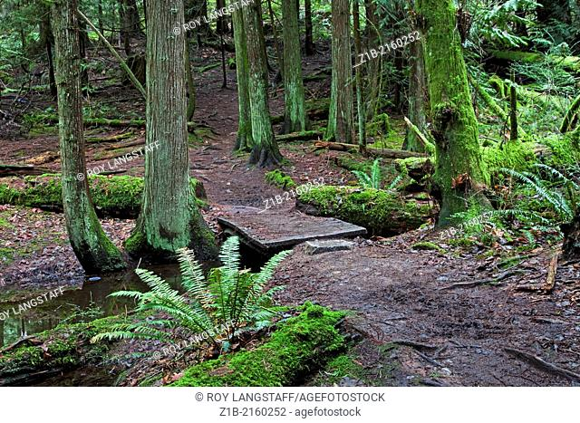Hiking tail and footbridge in a temperate rain forest