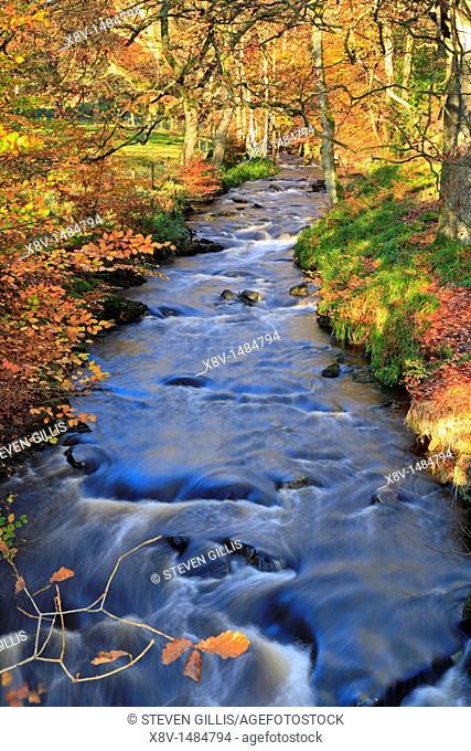 Autumn Luddenden Brook, Wade Wood, Luddenden Dean, Halifax, West Yorkshire, England, UK