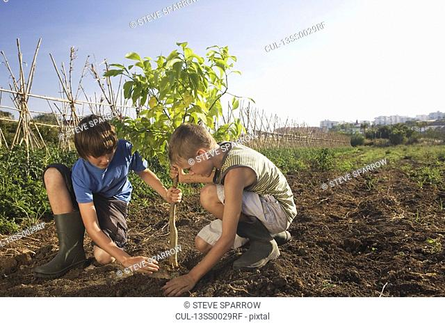 Two brothers planting tree