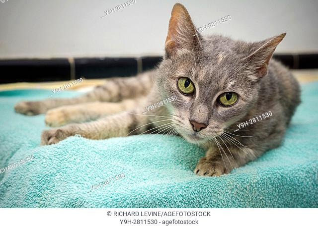 A nine year old rescued cat in Chelsea in New York
