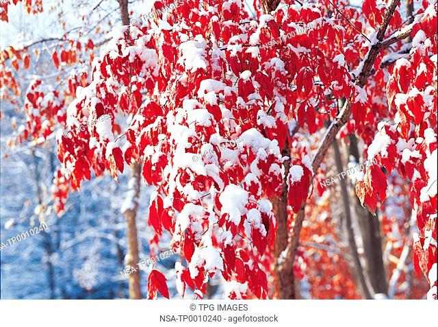 Close-up of leaves covered in snow