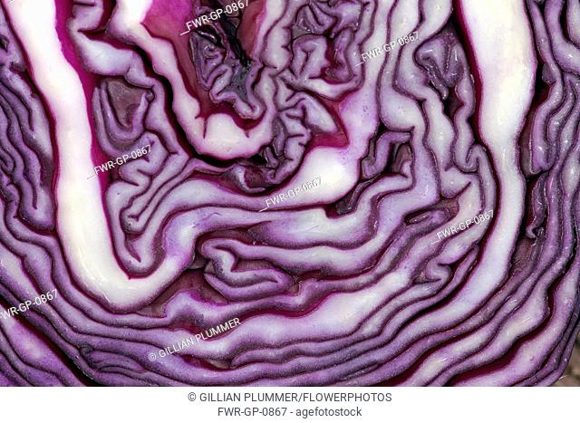 Red cabbage, Brassica oleracea capitata, Very close abstract view of slice through cabbage forming purple and white pattern