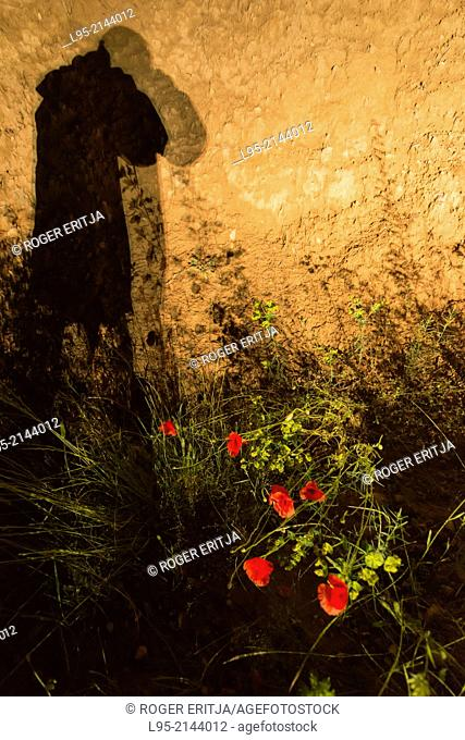 Some Red Poppies photographed by night at the lights of a car including onirical photographers silhouette, Spain