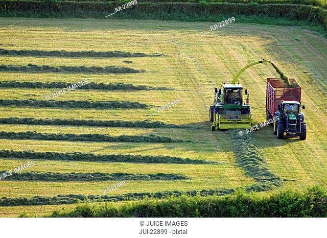 Tractors cutting silage and filling trailer in field