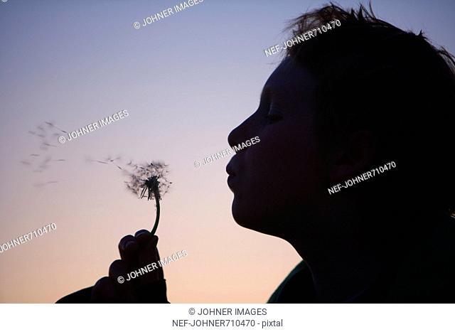 A teenage boy blowing on a dandelion, Sweden