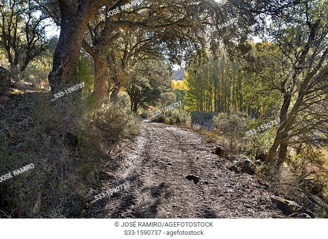 Road in the rio Dulce canyon  Aragosa Guadalajara  Castilla la Mancha  Spain
