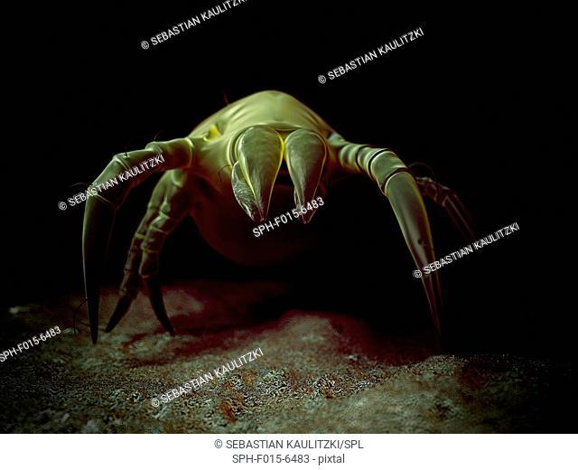 Dust mite, illustration