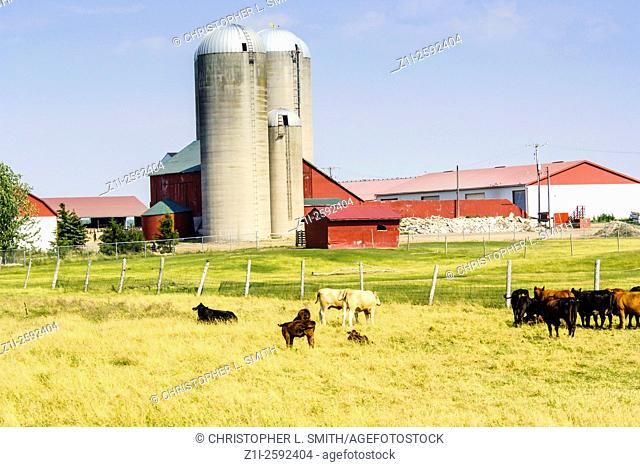 US Dairy and Beef farm