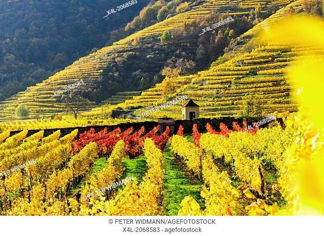 Austrian World Heritage Wachau in autumn, Austria, Lower Austria, Wachau, Weissenkirchen