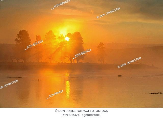 Fog on the Yellowstone River, with loafing Canada goose at sunrise