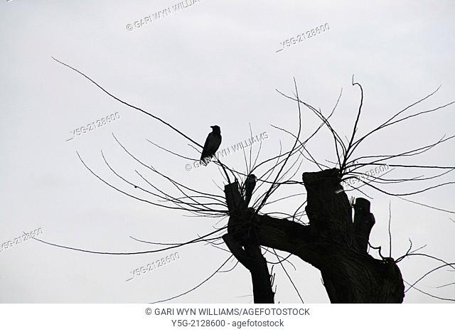two birds on branch of bare tree with dark sky