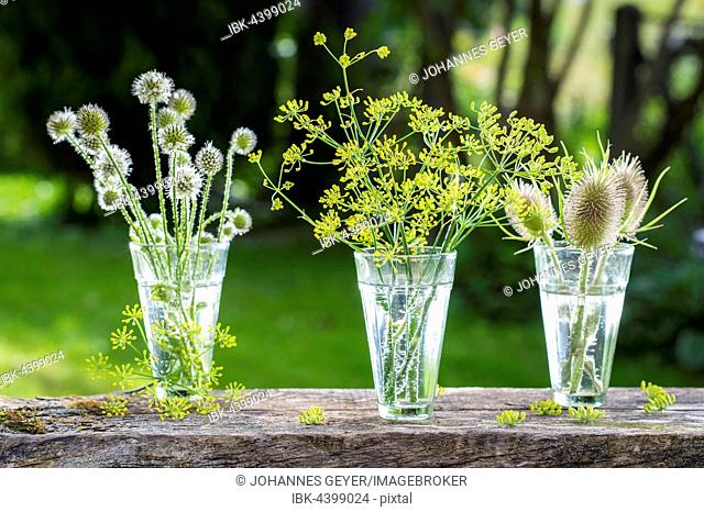 Wild teasels (Dipsacus fullonum), small teasels (Dipsacus pilosus) and fennel (Foeniculum vulgare) flowers in glasses, Germany