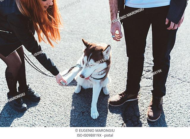 Cropped view of couple with dog