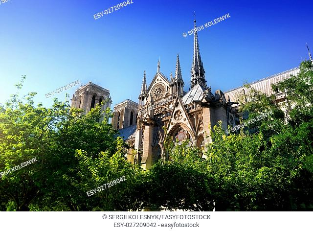 Cathedral Notre Dame de Paris among trees, France