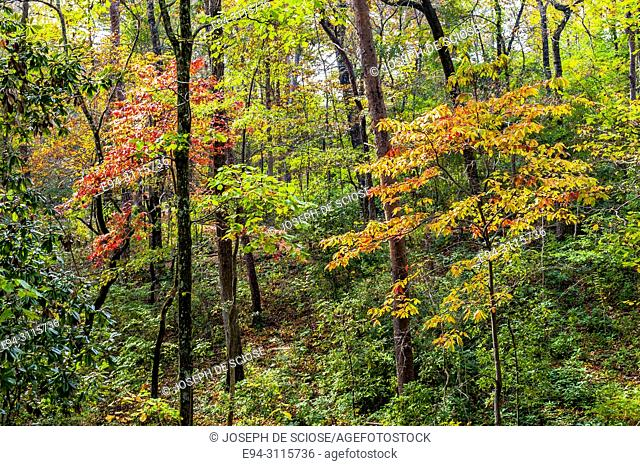 A mixture of deciduous and evergreen trees in a forest in the autumn