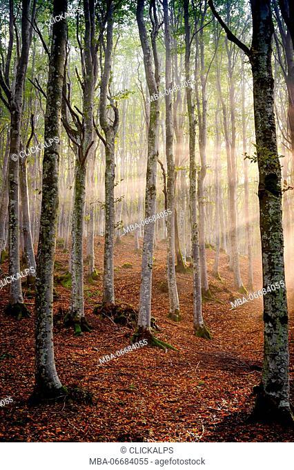 Sassofratino Reserve, Foreste Casentinesi National Park, Badia Prataglia, Tuscany, Italy, Europe. Sun rays in the mist